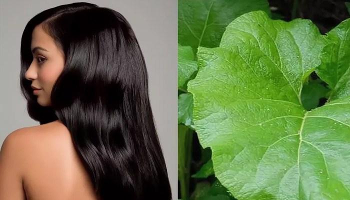 Как использовать корень лопуха для волос: рецепт с фото пошагово