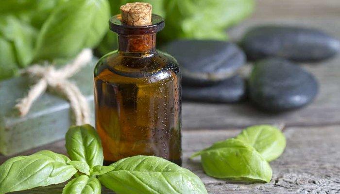 Масло базилика для волос: отзывы